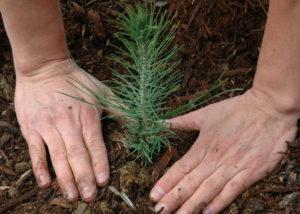 Conservation Tree Program