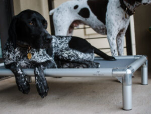 Tall Tails -K9 Cot Elevated Dog Bed